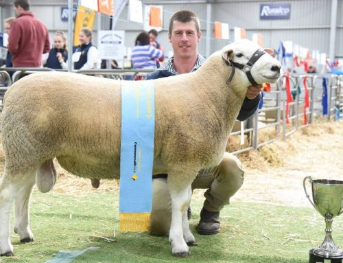 Australian Sheep & Wool Show 2019